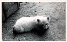 Norvège - Spitzbergen - Isbjorn - Ours Polar Bear - Noruega