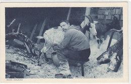 Beim Ziegenmelken - 1918     (P-93-60802) - Elevage