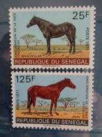 SENEGAL 1971 Y&T N° 349 & 350 ** - AMELIORATION DE LA RACE CHEVALINE - Sénégal (1960-...)