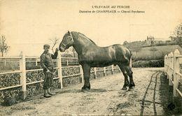 CHAMPEAUX(CHEVAL) - France