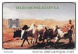 Madagaskar Phonecard Farmer Kühe - Madagascar