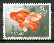 """VR China 1960 Mi.Nr.541 """"Zuchtformen Des Goldfisches,Rotmützchen""""1 Wert Used,gestp. - 1949 - ... République Populaire"""