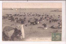 Tunisie - Tozeur - Troupeau De Chevres Ane Goat - Túnez