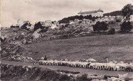 Font Romeu (66) - Transhumance - Autres Communes
