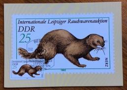 ZOOLOGIA ANIMALI  Visone Europeo (Mustela Lutreola Linnaeus, SU CARTOLINA DELLE GERMANIA ORIENTALE DEL 1982 - Congo Francese - Altri