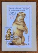 ZOOLOGIA ANIMALI  MARMOTTA  SU CARTOLINA DELLE GERMANIA ORIENTALE DEL 1982 - Congo Francese - Altri