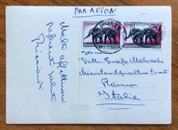 ZOOLOGIA ANIMALI ELEFANTI SU CARTOLINA ILLUSTRATA DAL CONGO BELGA A ROMA - Congo Francese - Altri