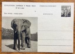 ZOOLOGIA ANIMALI ELEFANTE SU CARTOLINA POSTALE  CECOSLOVACCHIA - Congo Francese - Altri