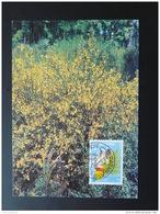 Carte Maximum Card Féérie Du Genet Wiltz Luxembourg 1998 - Vegetales