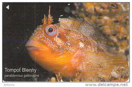 JERSEY ISL.(GPT) - Fish, Tompot Blenny, CN : 80JERA(normal 0), Used - United Kingdom