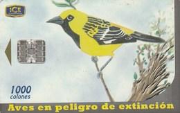 Costa Rica - Extinct Birds - Chorcha - Costa Rica