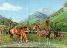 Chevaux.... - Cartoline Stereoscopiche
