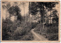MONT DE L'ENCLUS - Orroir - Chemin Sous Bois - Mont-de-l'Enclus