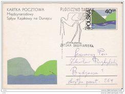 Saras Crane, Postcard, Poland, 1987 Saras Crane, Postcard, Poland, 1987 - Cranes And Other Gruiformes