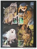 Carte Maximum Card (x4) Hibou Chouette Owl Chine Ref 61149 - 1949 - ... People's Republic