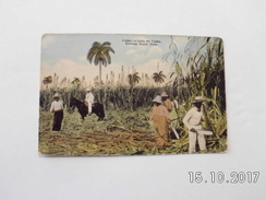 Cuba. - Cutting Sugar Cane. - Cuba