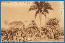 VARIAS MUESTRAS DE LA FLORA DEL PARAGUAY 1933 - Paraguay