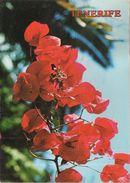Islas Canarias - Fleurs Typiques - Espagne