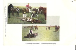 Ranching In Canada. Branding And Roping - Breeding