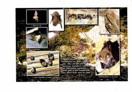 Cpm Photo - Chauve-souris - Murin Oreillard Rhinolophe - 2006 - Tierwelt & Fauna