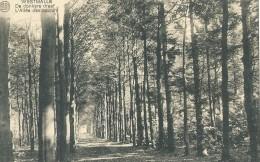 Westmalle - De Donkere Dreef - L'Allée Des Soupirs - Albert - 1923 - Malle
