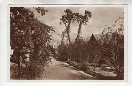 Somalia Italiana. Série I Carte N°5. Palma Dum. Vera Fotografia - Somalie