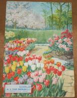 Catalogue A. J. Van Engelen - B. Flower Plants & Flowers