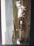 Unused Postcard From Feroe - Faroe Islands