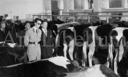 Postcard / ROYALTY / Belgique / Koning Boudewijn / Roi Baudouin / Belgisch Kongo / Kongo Belge / Congo / 1955 - Congo Belge - Autres