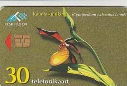 Estonia - Lady's-Slipper Orchid - Estonia