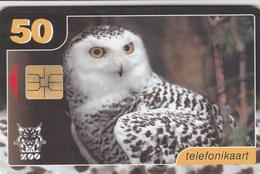 Estonia - Snowy Owl - Estonia
