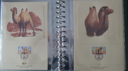 Belle Collection 4/4 Philatélique En étui Du WWF Dont Timbres **, Enveloppes 1er Jour, Cartes Maximums... Pas Commun !!! - Collections (with Albums)