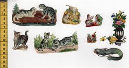 CHROMOS DECOUPIS A10 ANIMAUX - Animals