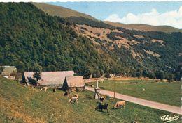 Vaches Animaux Vache Boeufs Veau Troupeau De Vaches Paturages Ferme Paysan Pâturage Vallée Du Lys Près Luchon - Vaches