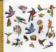 CHROMOS DECOUPIS A14 OISEAUX - Animales