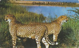 Namibia - Big Cats - Cheetah - Namibia