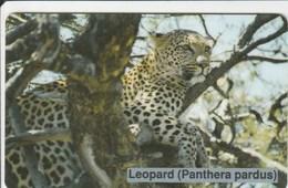Namibia - Big Cats - Leopard - Namibia