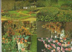 6 CART. 4^ EUROFLORA A GENOVA 25 APRILE 3 MAGGIO 1981 (304) - 5 - 99 Cartoline