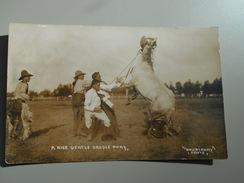 ETATS-UNIS WY WYOMING A NICE GENTLE SADDLE PONY  PHOTO DOUBLEDAY FOUNDED IN 1897 RODEO BULLRIDER - Etats-Unis