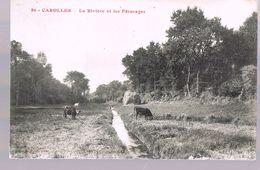 CAROLLES . La Rivière Et Les Pâturages . - France