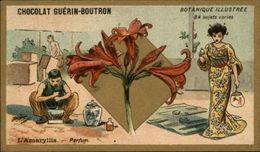 PARFUM - Parfumerie - Chromo Chocolat Guérin-Boutron - Amaryllis - Guérin-Boutron