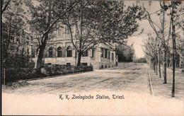 ! Alte Ansichtskarte Trieste Zoologische Station - Trieste