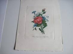 Dessin Rose Empereur Napoléon 33 X 25 Cm - Prints & Engravings
