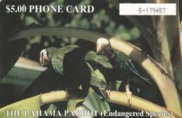 Bahamas - Bahamas Parrot - Bahamas
