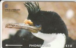 Falklands Is. - King Cormorant  - 314CFKA - Falkland