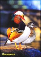 Russia 2010 Postal Stationery Card Mandarin Duck Bird Birds - Eenden