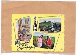 DEPT 51 - Souvenir De LA CHAMPAGNE - MULTI-VUES  - 3 Vues - TON1 - - Reims