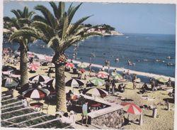 83,VAR,TOULON,PLAGE,PALMIER,BAR,CAFE,CARTE PHOTO AERIENNE COMBIER - Toulon