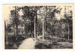 Keerbergen  Aux Creux Des Bois.In 't Bos - Keerbergen