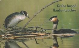 Luxembourg - Birds -  Oiseau De L'année 2001 - TS25 - Luxemburg